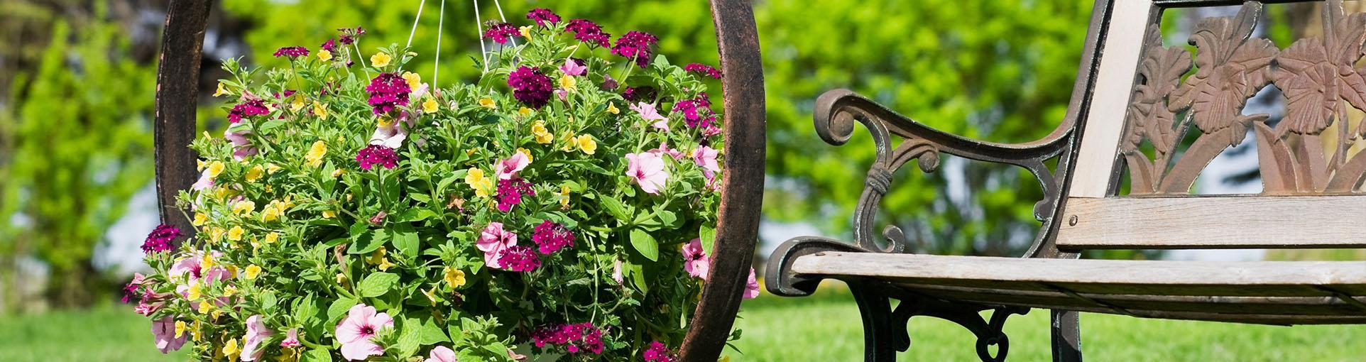 Ławka i kwiaty
